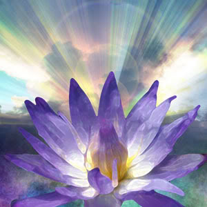 purple-lotus-full-size